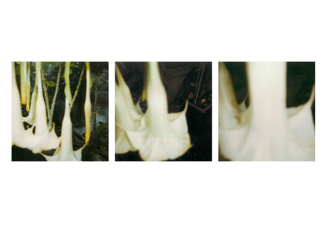 , 'Angel Trumpets I, II and III,' 2008, BASTIAN