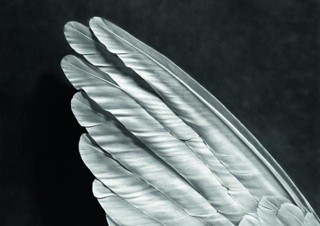 , 'Angel's Wing,' 2014, Galerie Raphael