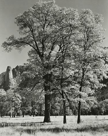 , 'Autumn-Yosemite,' ca. 1932, Robert Mann Gallery