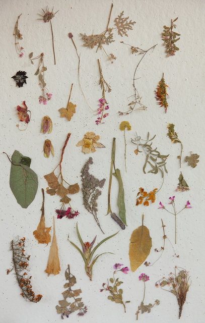 , 'Plant Press Collection,' 2009, Barnard
