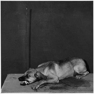 , 'Hungry dog,' 2003, Galleria Massimo Minini