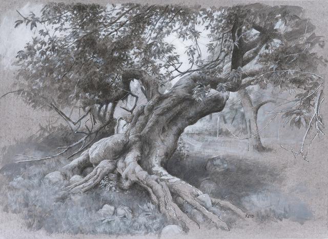 , 'Tree Study (Summer),' 2016, The Scottish Gallery