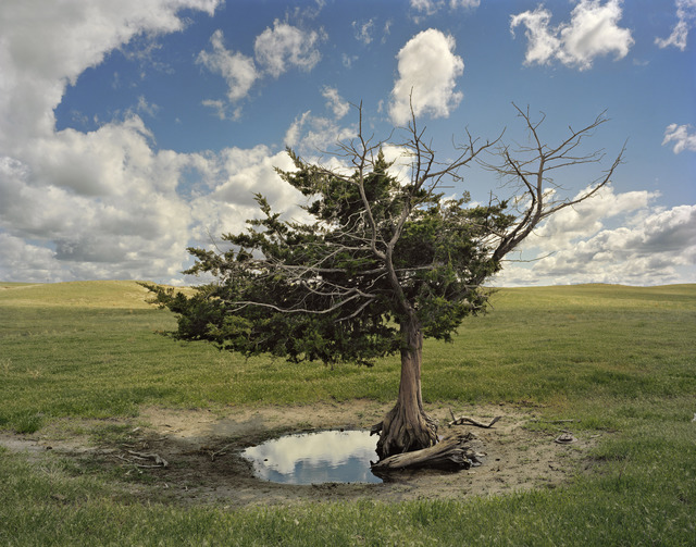 , 'Homesteader's Tree, Cherry County, Nebraska,' 2013, Yancey Richardson Gallery