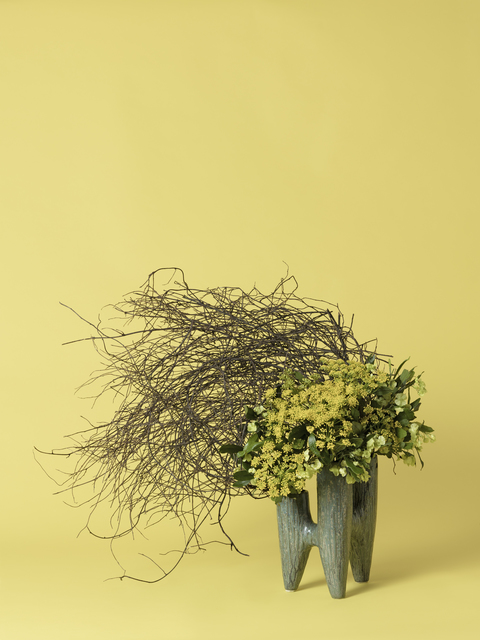 , 'The Hysteric, Fennel (Foeniculum sp.),' 2015-ongoing, Denny Dimin Gallery