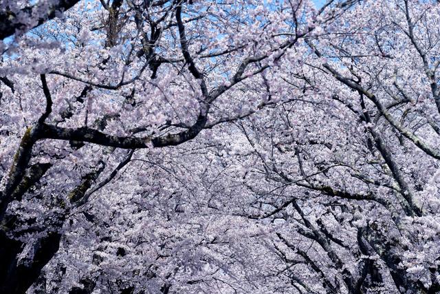 , 'Yonomori, Tomioka, Fukushima,' 2020, KANA KAWANISHI GALLERY