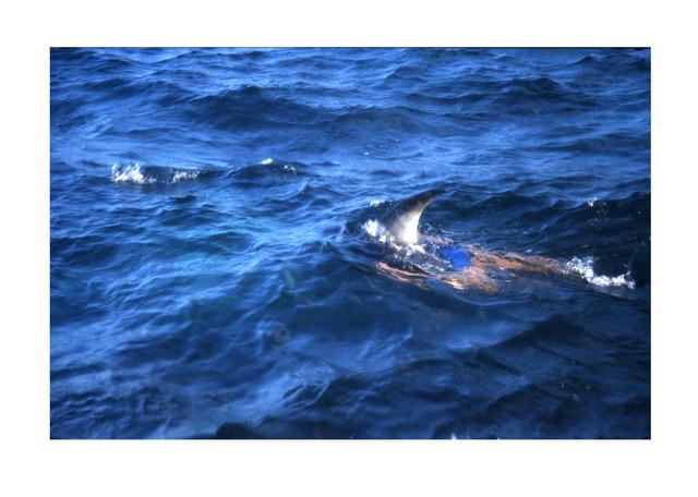 Miguel Calderón, 'La Imposibilidad de Escapar (Jaws 5) III', 2002, Instituto de Visión