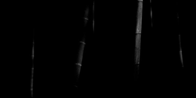 Choi Byung-Kwan, 'Bamboo Panorama #7', 2010, ElliottHalls