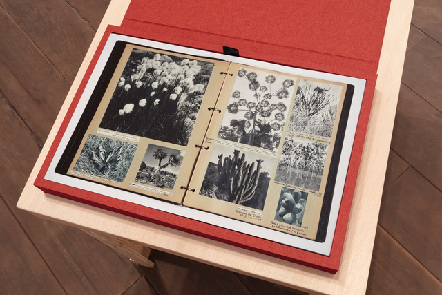 , 'Livro Botanica (Botanica Book),' 2016, Galeria Marilia Razuk