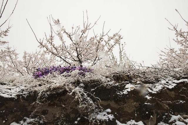 , '꽃에게,' 2018, Gallery BK