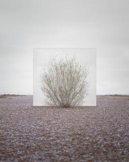 , 'Tree...#5,' 2013, Yossi Milo Gallery