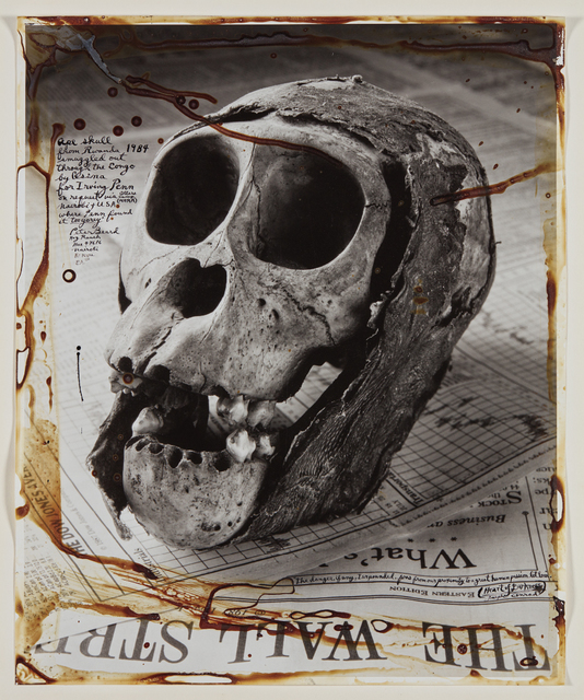 Peter Beard, 'Ape Skull from Rwanda', Photographed in 1984 and executed later, Phillips