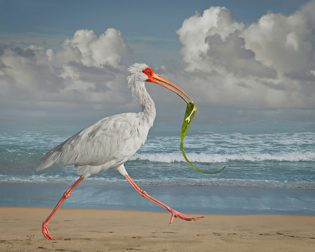 , 'White Ibis with Fish,' 2014, PDNB Gallery