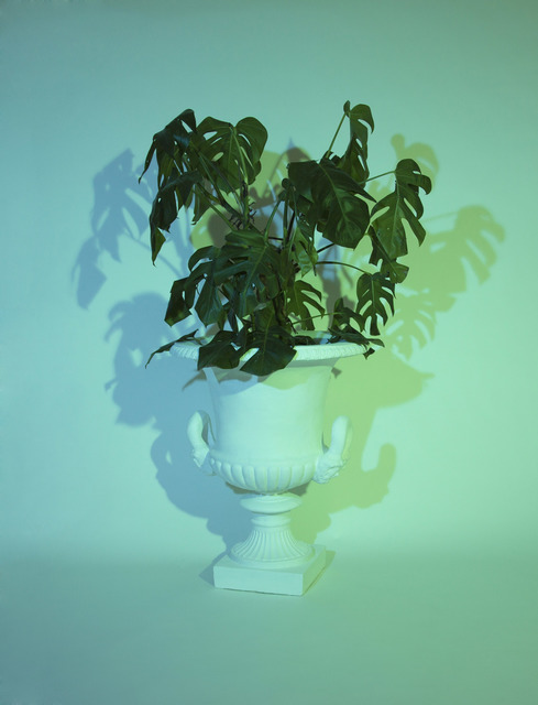 , 'Plant II,' 2014, Christine Park Gallery