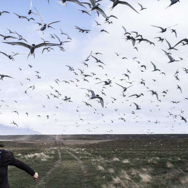 , 'The Judgement of Terns,' 2016, Huxley-Parlour