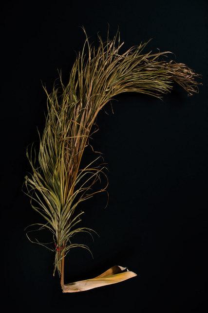, 'Palmeira encontrada nas margens dos rio,' 2015, LhGWR