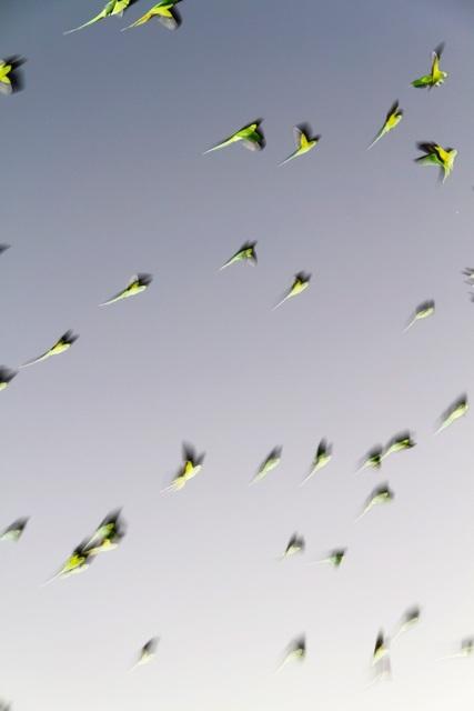 , 'Tokyo Parrots 001,' 2013, IBASHO