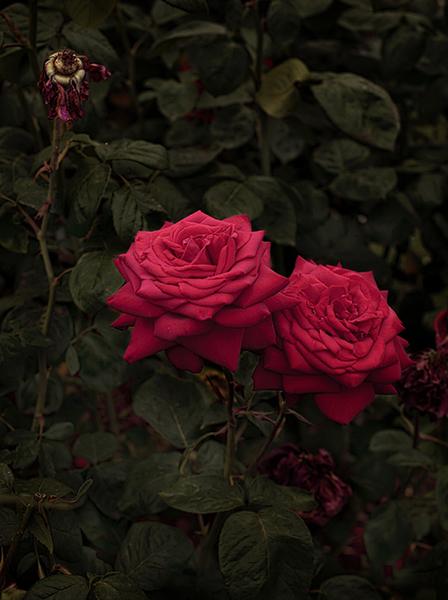 , 'Bloom #4,' 2018, MARS