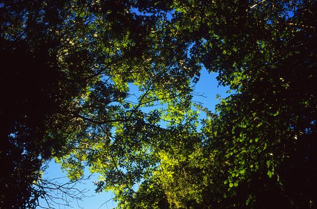 Justin Partyka, 'Treetops, Cowpasture Lane, Suffolk', 2014, Osborne Samuel