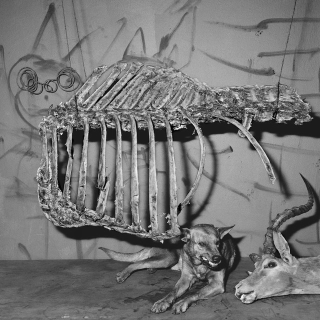 , 'Snarling Dog,' 2007, Willas Contemporary