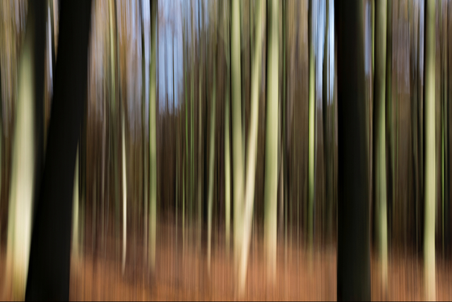 , 'Pure Nature 34, Sonian Forest, Brussels,' 2018, Galerıe Blue Square
