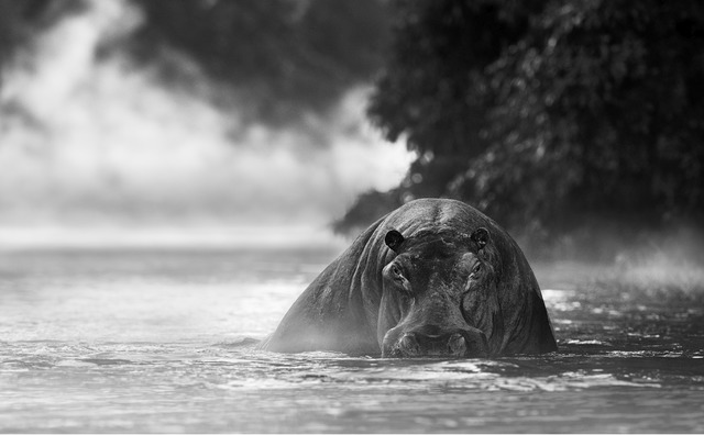 David Yarrow, 'The river monstner', 2018, Photography, Archival pigment ink on paper, Fineart Oslo