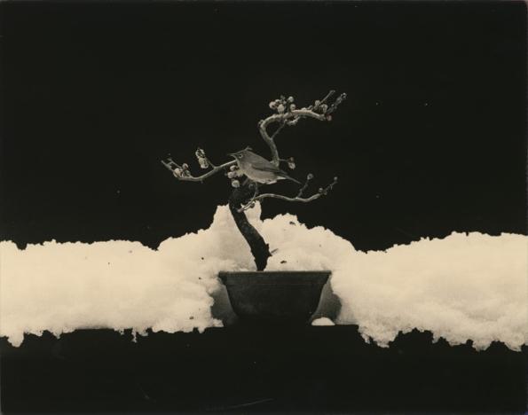 , '#1675,' , Craig Krull Gallery