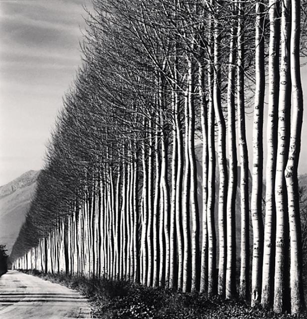 , 'Poplar Trees, Fucino, Abruzzo,' 2016, Dolby Chadwick Gallery