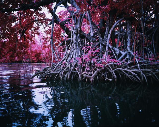 , 'Mangrove I,' 2014, Jack Shainman Gallery