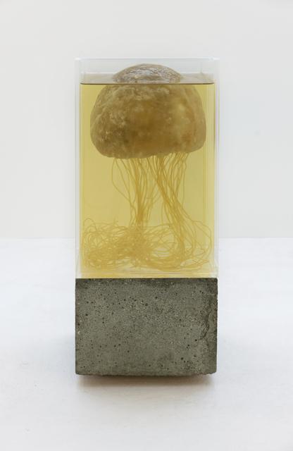 , 'Future Friture - Turritopsis Dohrnii,' 2018, Marie Kirkegaard Gallery
