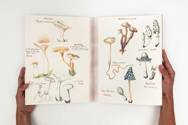 , 'Ma collection de champignons bons et de champignons mortels,' 1973-2011, mfc - michèle didier