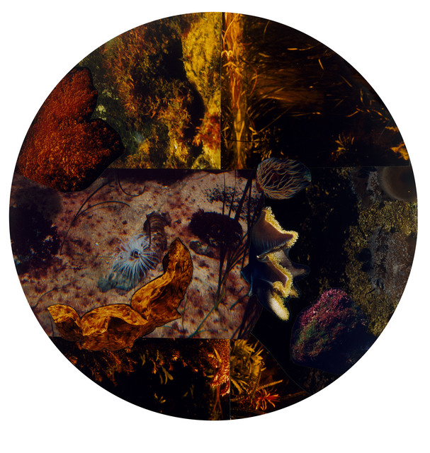 , 'Hybrida-8,' 2014, Galerie Nikolaus Ruzicska