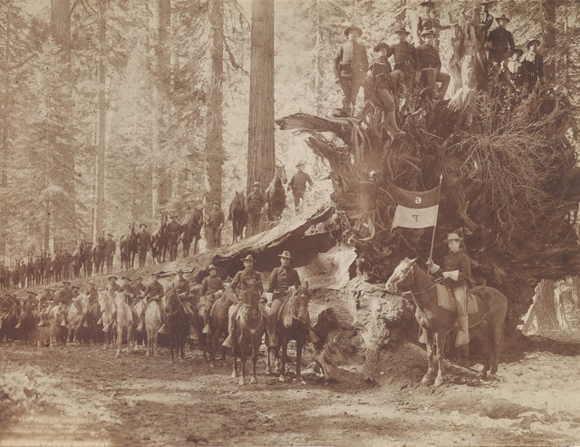 , 'The Fall of the Monarch with Troop F, Sixth Cavalry, United States Army, Mariposa Big Tree Grove, Southern Pacific Company,' 1899, Scott Nichols Gallery