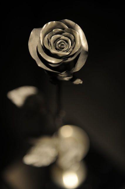 , 'Rose ,' , Yang Gallery