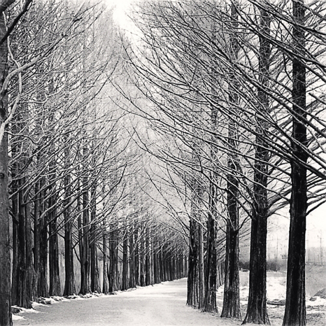 , 'Alley of Trees, Damyang, Jeollanamdo, South Korea,' 2012, Patricia Conde Galería