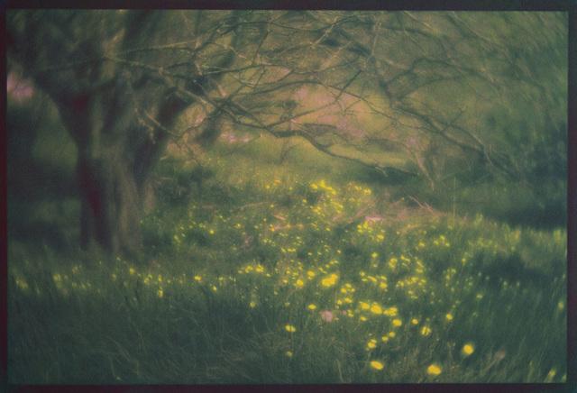 , 'Monhegan Dandelions,' , Soho Photo Gallery