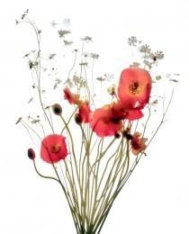 Carol Henry, 'Icelandic Bouquet', Not available, Susan Spiritus Gallery