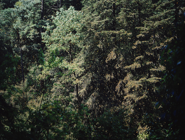 , 'Kaleidoscope Landcape I,' 2019, Galleria Heino