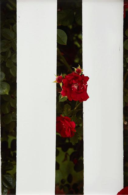 , 'Picket Fence II,' 2017, Gagosian