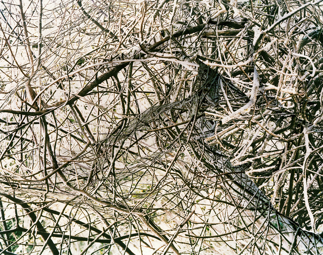 Laura Plageman, 'Thicket 2', 2006, De Soto Gallery
