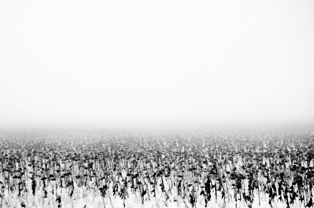 , 'Untitled 01,' 2006-2009, Galerie Les filles du calvaire