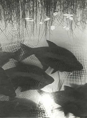 , 'Dreaming Fish,' 1930, Robert Mann Gallery