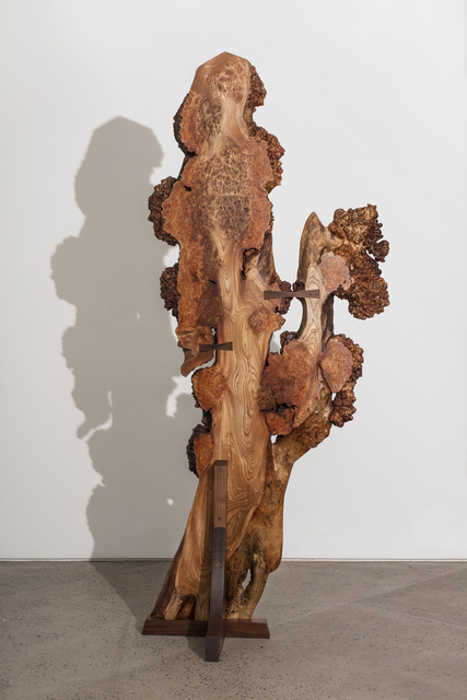 , 'Wych Elm Burl Tsuitate,' 2017, Chamber