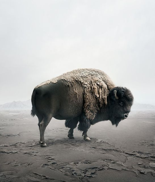 , 'Be Here Bison ,' 2019, The Directed Art Modern