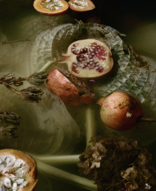 , 'Dark Matter #2, Pomegranate and Hosta,' 2016, Huxley-Parlour