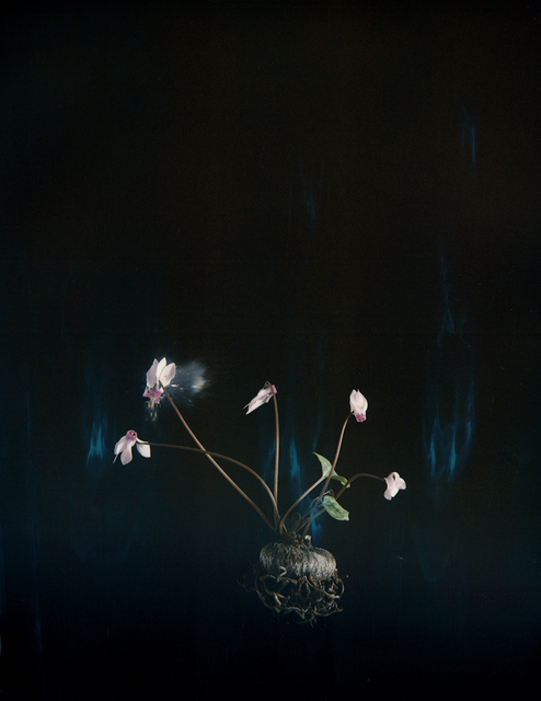 , 'Cyclamen 03P,' ca. 2018, Yancey Richardson Gallery