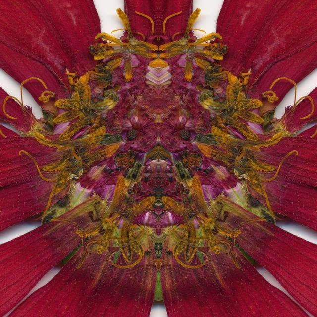 E.V. Day, 'Seducer II (C)', 2010-2011, Carolina Nitsch Contemporary Art