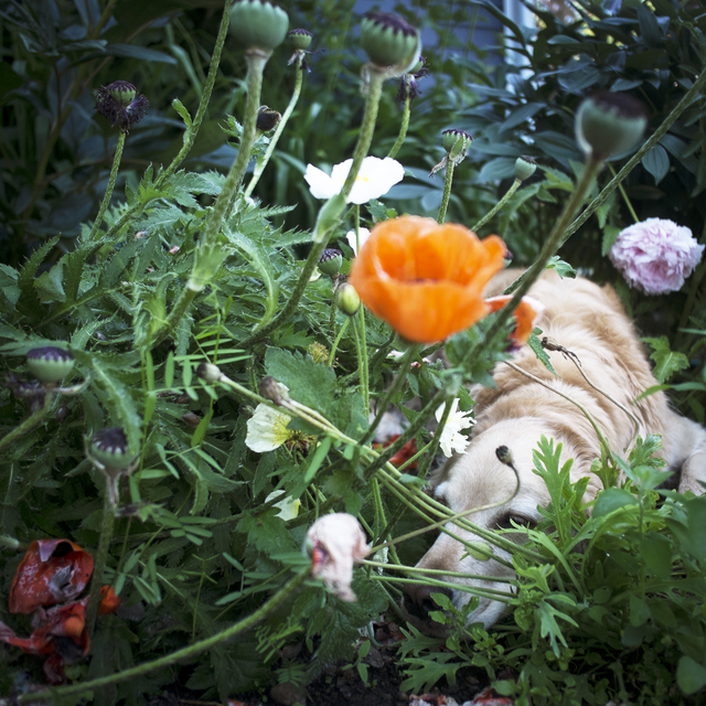 , 'Scarlet and the Poppies,' 2014, photo-eye Gallery