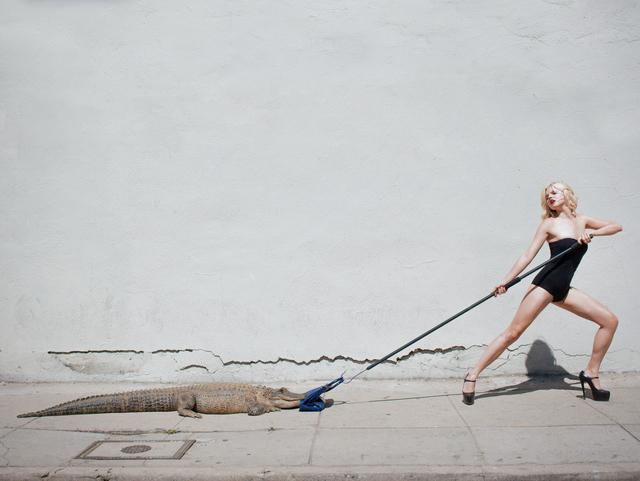 Tyler Shields, 'Birkin Tug of War', 2012, Photography, Chromogenic Print, Samuel Lynne Galleries