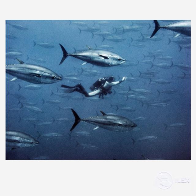 , 'Tuna,' 2011, ILEX Gallery