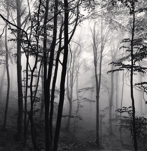 , 'Forest Mist, Study 2, Rigopiano, Abruzzo, Italy,' 2016, G. Gibson Gallery
